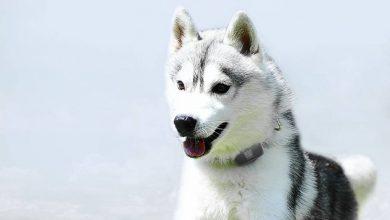 Photo of V-Pet, el rastreador de animales que buscabas tener