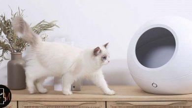 Photo of Esta casa para gatos de una marca que vende Xiaomi es inteligente y llega con climatizador y app