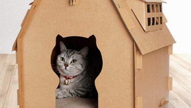 Photo of Las mejores casas y accesorios de cartón para gatos que podemos comprar desde china