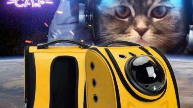 Photo of Episodio 40 – Llévate tu gato donde quieras, pero con Xiaomi