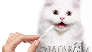 Xiaomi análisis perros y gatos