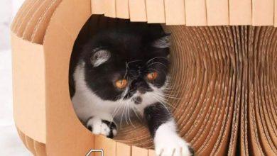 Photo of Xiaomi vuelve a la carga con los gatos y pone a la venta un nuevo rascador de cartón